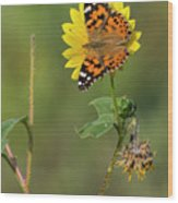 Ddp Djd Painted Lady On Sunflower 2690 Wood Print