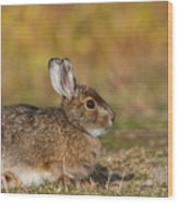 Ddp Djd Snowshoe Hare 98 Wood Print