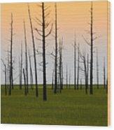 Dead Cedars Wood Print