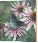 Dead Flower Wood Print