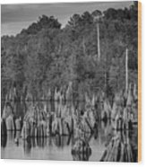 Dead Lakes Cypress Stumps Bw  Wood Print