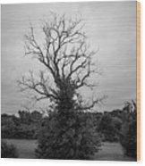 Dead Live Oak Wood Print