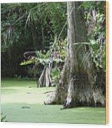 Wild Florida Dead Mans River Wood Print
