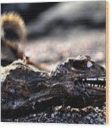 Dead Marine Iguana Wood Print
