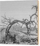 Dead Old Tree Near Monument Valley Arizona Wood Print
