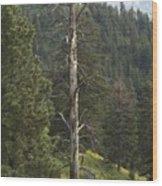 Dead Pine Wood Print