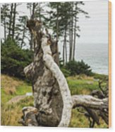 Dead Tree At Ecola Park Wood Print