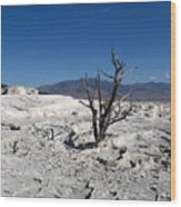 Dead Tree In Yellowstone Park Hot Springs  Wood Print