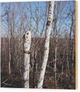 Dead Tree Wood Print by Richard Mitchell