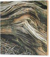 Dead Tree Textures Wood Print