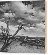 Dead Trees at Mesquite Dunes Wood Print