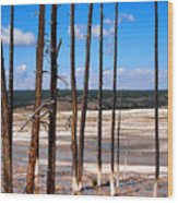 Dead Trees Standing In Hot Springs Within Yellowstone National P Wood Print