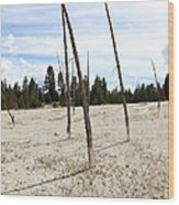Dead Trees, Yellowstone Wood Print
