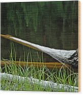 Deadwood And Pine Reflections Wood Print