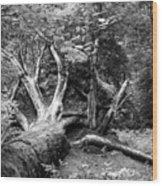 Deadwood Wood Print