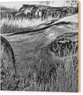 Deadwood On Cherry Creek Trail 2 Wood Print