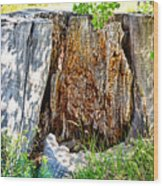 Deadwood On Cherry Creek Trail 3 Wood Print