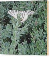 Dear Butterfly  Wood Print