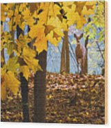 Dear In The Sunlight  Wood Print