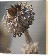 Death Curls Wood Print
