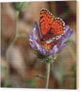 Death Valley Butterfly Wood Print