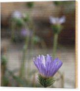 Death Valley Lavenders Wood Print