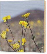 Death Valley Super Bloom 2016 Wood Print