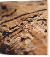 Debarked Tree Wood Print