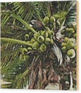 Debbie's Coconuts Wood Print