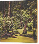 Decayed Vegetation - Run Swamp, North Carolina Wood Print