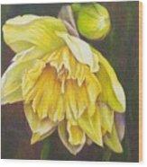 December Flower Narcissus Wood Print