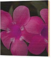 Decorative Floral A62917 Wood Print