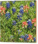 Decorative Texas Bluebonnets Meadow Digital Photo G33117 Wood Print