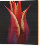Decorative Tulip Wood Print