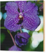 Deep Blue Orchid Wood Print