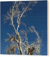 Deep Blue White Tree Wood Print