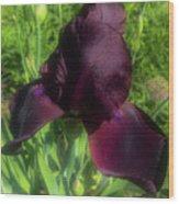Deep Burgundy Iris Wood Print