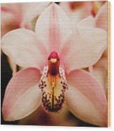 Deep Cut Orchid Wood Print