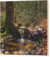Deep Forest Creek Wood Print