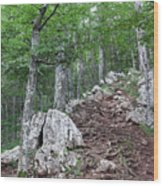 Deep Forest Rocky Path Nature Wood Print
