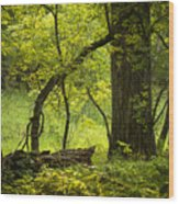 Deep Forest Scenic Wood Print