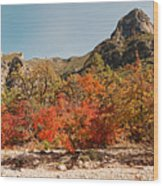 Deep In Mckittrick Canyon - Lost Maples And Ponderosa Pines Against Backdrop Of Guadalupe Mountains  Wood Print
