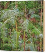 Deep In The Forest, Tamborine Mountain Wood Print