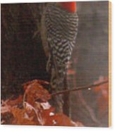 Deep In The Forest Woodpecker Wood Print