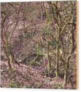 Deep In Woods Wood Print