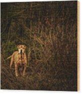 Deep Mountain Sentinel  Wood Print
