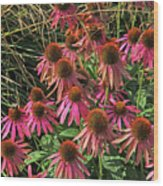 Deep Pink Echinacea Straw Flowers Green Leaf And Grass Background 2 9132017 Wood Print
