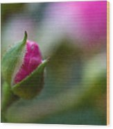 Deep Pink Rose Bud - Rose Bud Wood Print