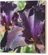 Deep Purple Irises Dark Purple Irises Summer Garden Art Prints Wood Print