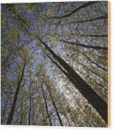 Deep Wood Print